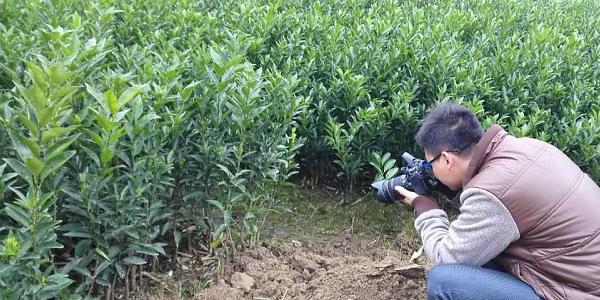 红河果苗网站大棚批发在哪-- 柳州市绿盛农业科技有限公司