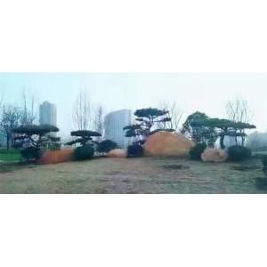 莱芜造型景观松批发价格 莱芜造型景观松种植基地