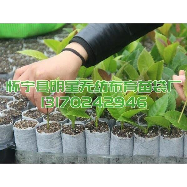油茶苗专用可降解无纺布育苗袋营养袋厂价优惠