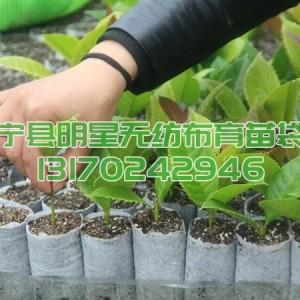 油茶苗专用可降解无纺布育苗袋营养袋