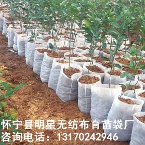 工厂直销可定制口径14高17无纺布育苗