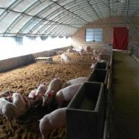 畜牧养殖钢结构车间