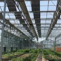 蔬菜种植温室大棚