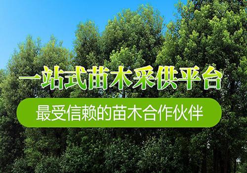 绿化工程苗木